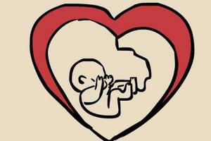 担心孩子患上先天性心脏病?试试胎儿心脏超声检查