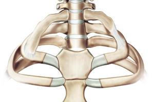《張思萊小課堂》第51期:孩子有枕禿和肋緣外翻是缺鈣的表現嗎