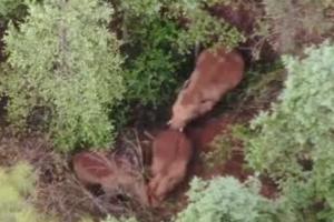 扭屁股、蹭蹭蹭……小象花式撒嬌阻攔象媽媽午休