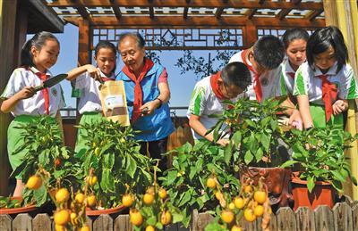"""昨日,东四九条小学举行开学典礼。在屋顶生态园,""""环保奶奶""""居月茹教同学们用厨余垃圾肥料为植物上肥。新京报记者 李木易 摄"""