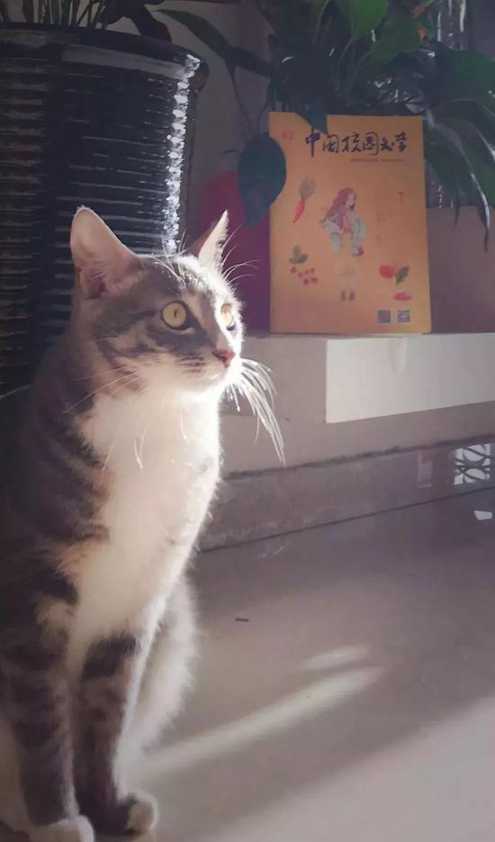 """妈妈捡的猫""""王小七"""""""