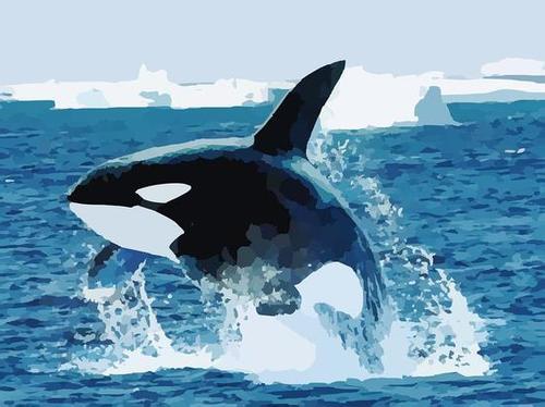 只有人类和两种鲸有绝经期 提前绝育是为了生生不息?强娶霸宠