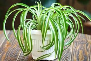 快醒醒!绿植、防雾霾口罩、空气净化器对甲醛没用啊!