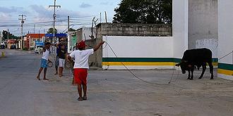 墨西哥少年街头练套牛