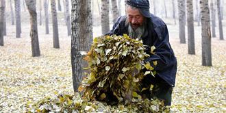 七十岁老人起早贪黑扫树叶