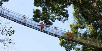 望天树上的悬空走廊