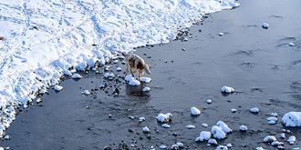 不冻河真的不结冰