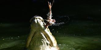 鳄鱼出没请注意
