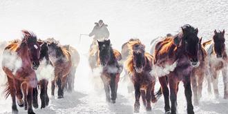 乌兰布统马踏飞雪