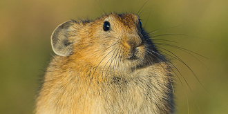 我是兔兔,不是鼠鼠