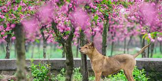 重庆大观春色美