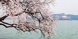 桃花又醉三月春