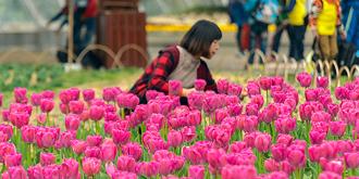 此花开后春始来