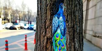 """树上藏着一只""""孔雀"""""""