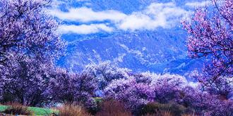 仙气飘渺的十里桃花
