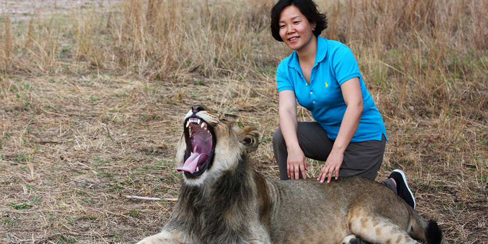 刺激!我在津巴布韦遛狮子