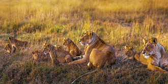 双狮王的幸福一家