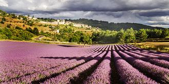 法国人浪漫,因为有普罗旺斯