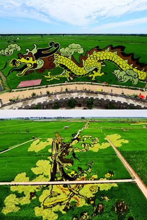 世界上面积最大的稻田画