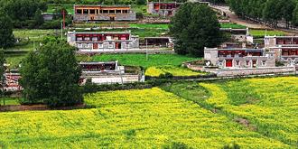 康巴藏区的油菜花海