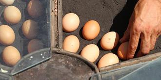 火焰山有多热?鸡蛋直接烤熟!