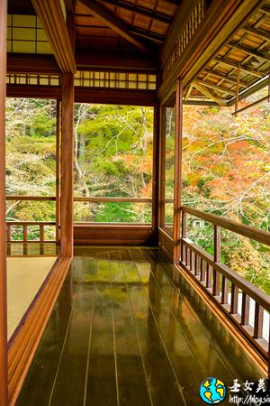 京都观赏红叶的最佳场所