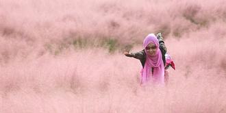 """梦幻!粉紫色的""""小草原"""""""