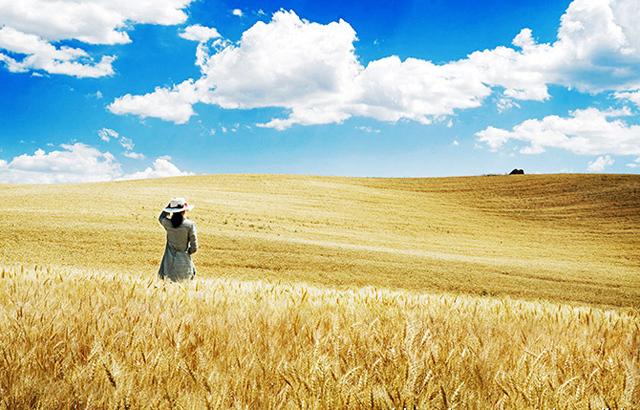 丰收季的江不拉克草原太美