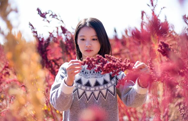 祁连山下黎麦赤红似毯