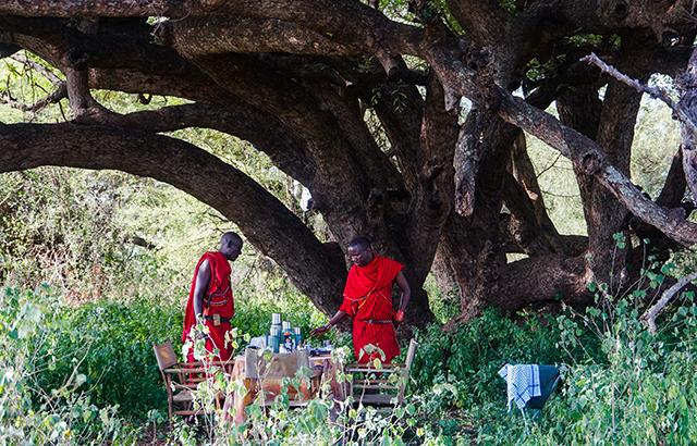 在非洲享受一次浪漫的丛林野餐