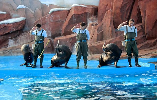 实拍:驯养师们如何训练憨态可掬的海狮