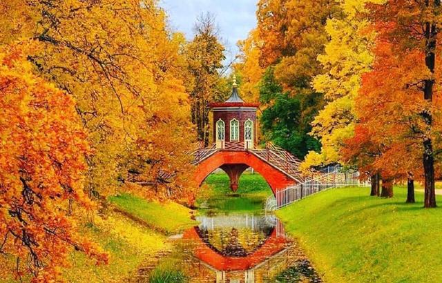 滿城遍地黃金樹!實拍圣彼得堡秋景