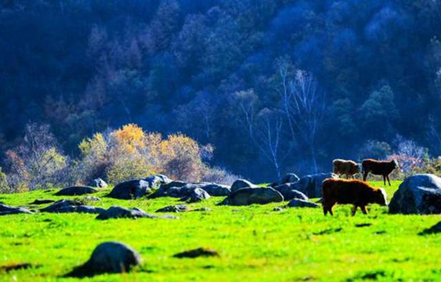 秦嶺留壩,深藏著讓人嘆為觀止的絕美秋色