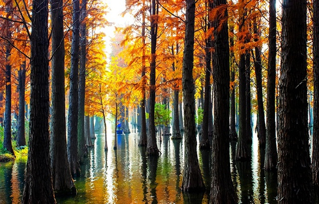 """实拍上海青西郊野公园""""水上森林""""美爆了"""