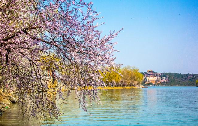 实拍:春意盎然的颐和园西堤