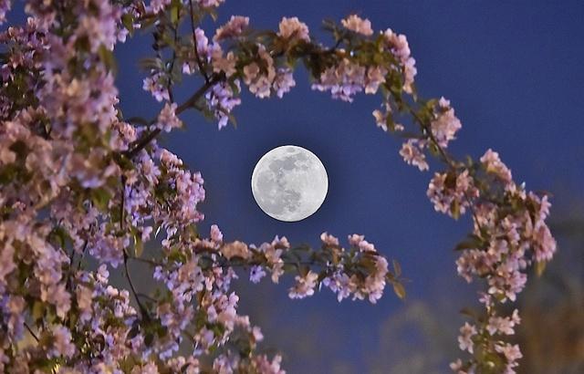 花好月圆!实拍今年最大的超级月亮