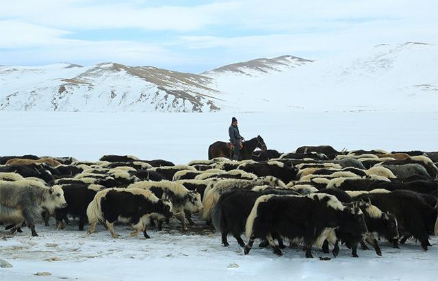 雪地中的迁徙:哈萨克族牧民春季转场