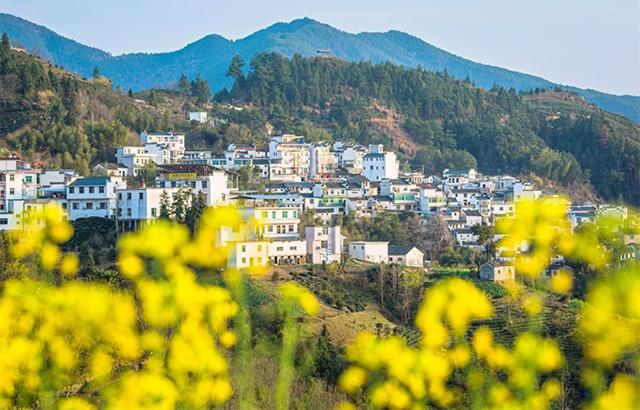 安徽有座云端上的村落,油菜花开宛若仙境