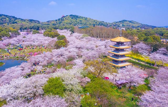 来世界樱花之都,打卡绝美梦幻赏樱地