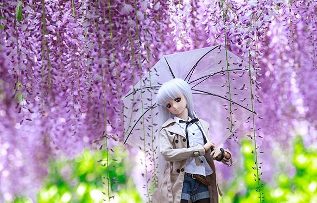嘉定紫藤园,花团锦簇如梦似幻