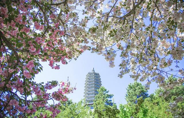 云居寺的春天,花紅柳綠美不勝收