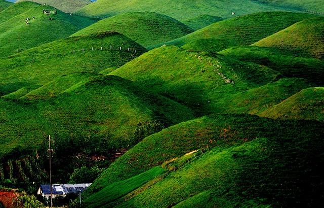 夏日的高山草場,美得像一幅油畫