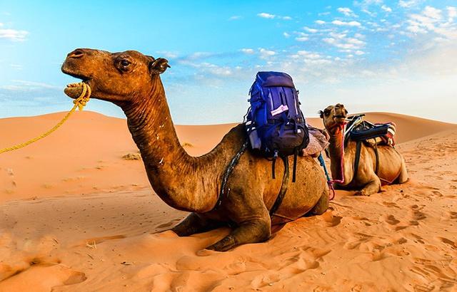 我在撒哈拉沙漠度過難忘的兩天一晚