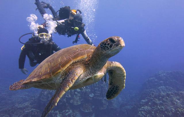 去世界上最棒的小島潛水追海龜