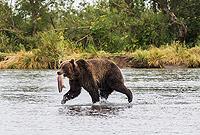 在全球最佳觀熊地露營