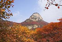太行山满山红叶