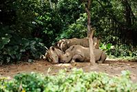 世界最大的动物公园