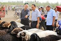 交投活跃的牛羊大巴扎