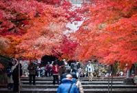 枫叶季的京都有多美