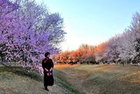 奥森公园山桃花海太壮观